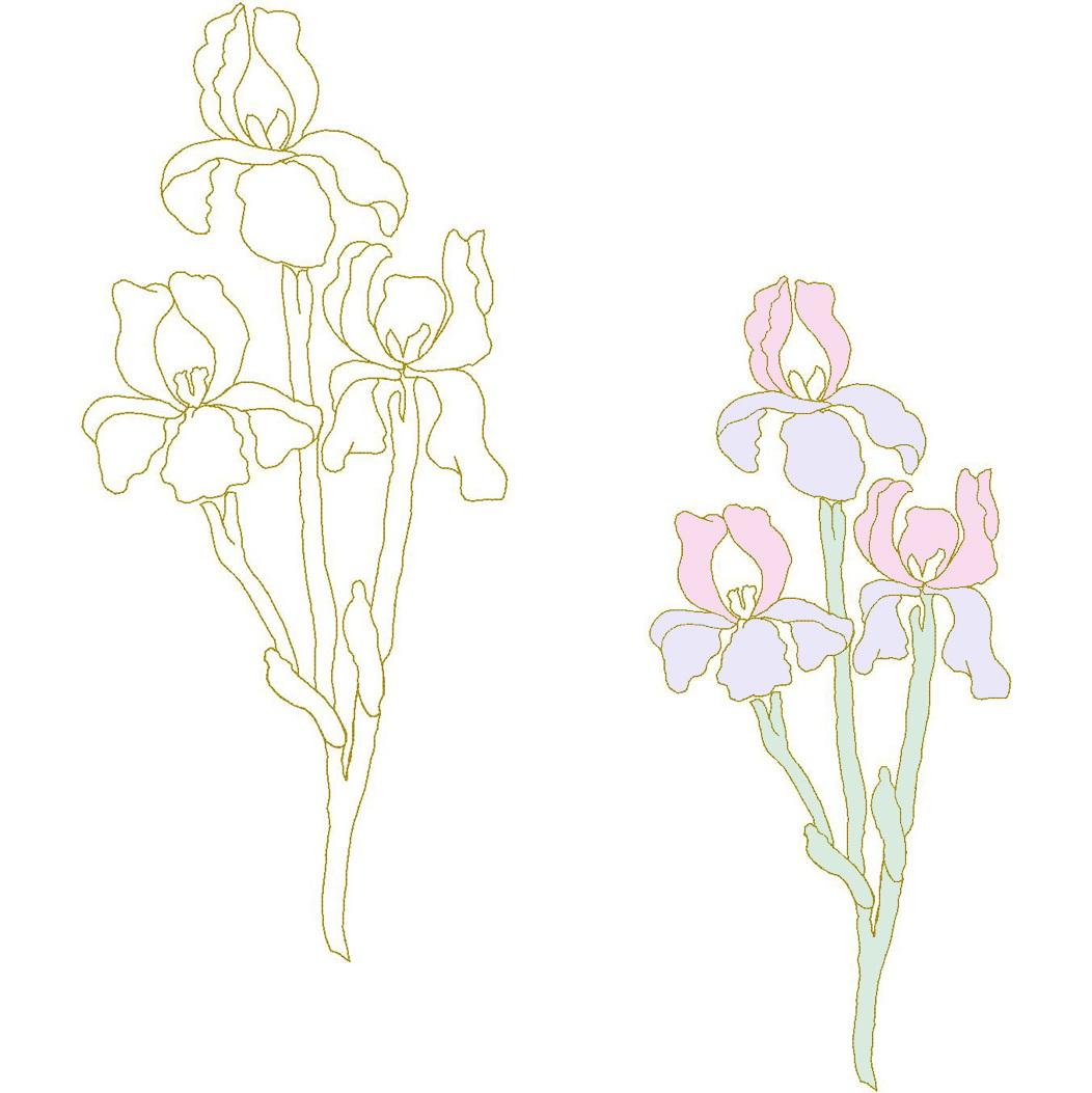 Iris (Trapunto)