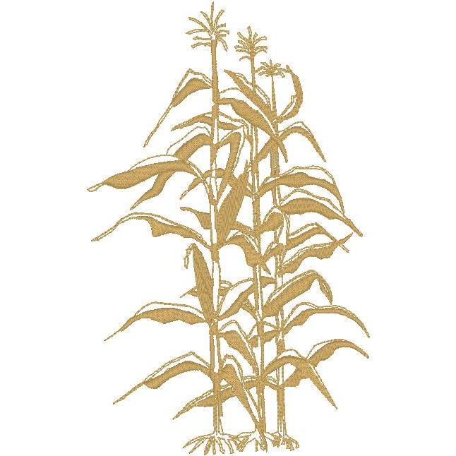 Corn Stalk Tiedemann Bevs Corn stalk synonyms, corn stalk pronunciation, corn stalk translation, english dictionary definition of corn stalk. corn stalk