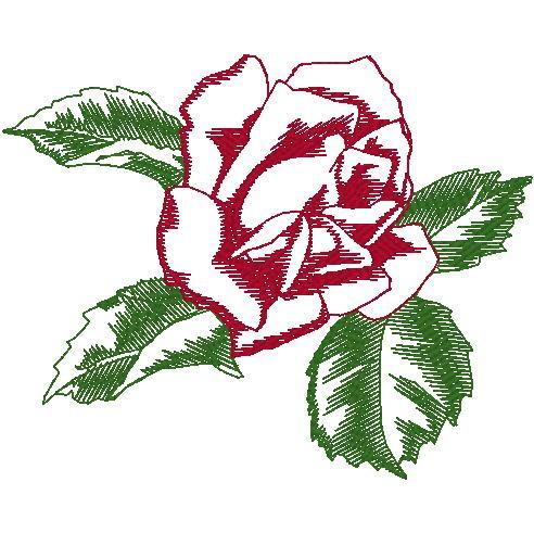 Balboa Single Rose