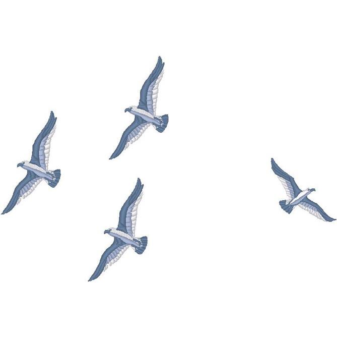 Birds Only